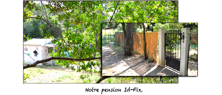 phot d'accueil de la pension chien chat ID-FIX